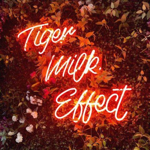 Tiger Milk Effect